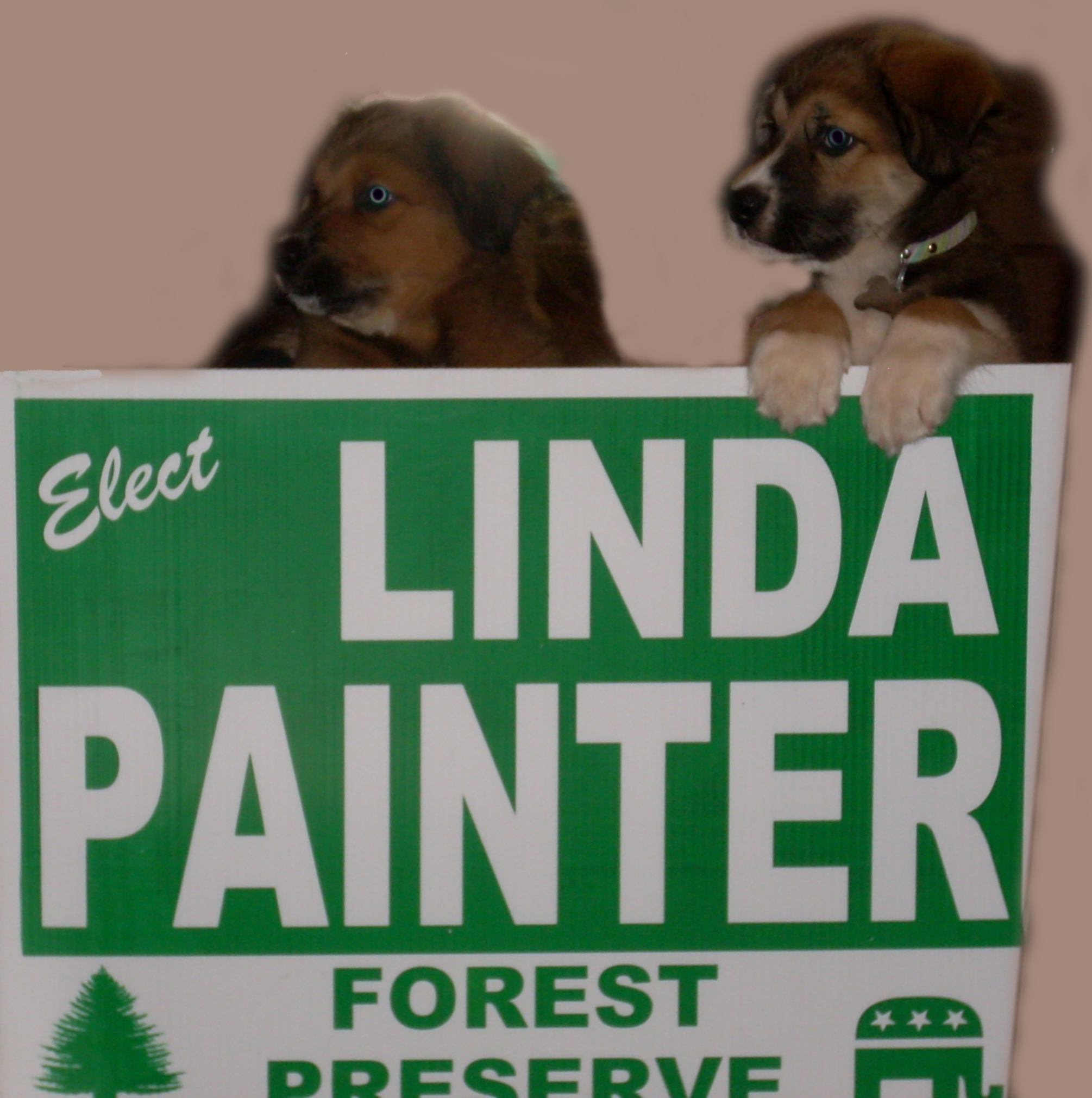 Pups for Linda Painter